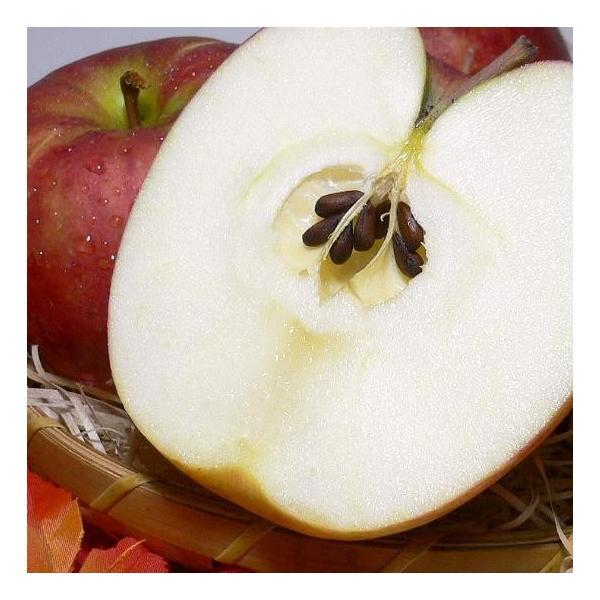 りんご サンつがるリンゴ 約10kg 小玉 46〜50個入り 青森産|サン津軽 10キロ 林檎 アップル