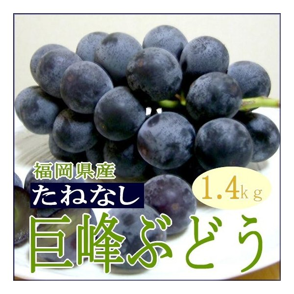 ぶどう 福岡産 種なし 巨峰 ブドウ(たねなしきよほうぶどう)約1.4kg(350g×4パック入り)|たねなし巨峰 葡萄 グレープ 黒ブドウ