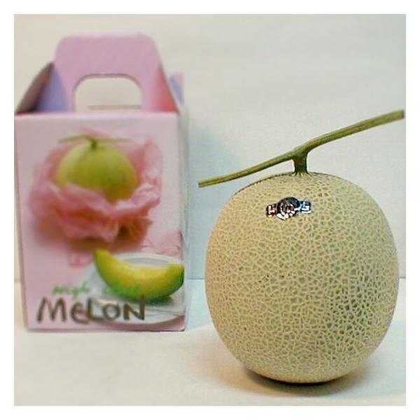 メロン 静岡産 温室マスクメロン 1玉1.8kg(白級)  高級メロン アールスメロン 母の日 父の日 プレゼント フルーツ