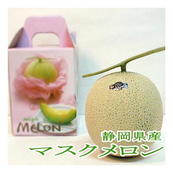 メロン 静岡産 温室 マスクメロン 1玉 約1.5kg 白級 化粧箱|温室メロン 高級メロン アールスメロン しろきゅう ネットメロン