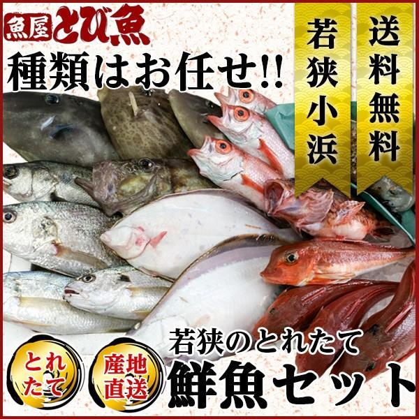 鮮魚セット 獲れたて鮮魚 種類はおまかせ 季節の魚介を詰め合わせ ...