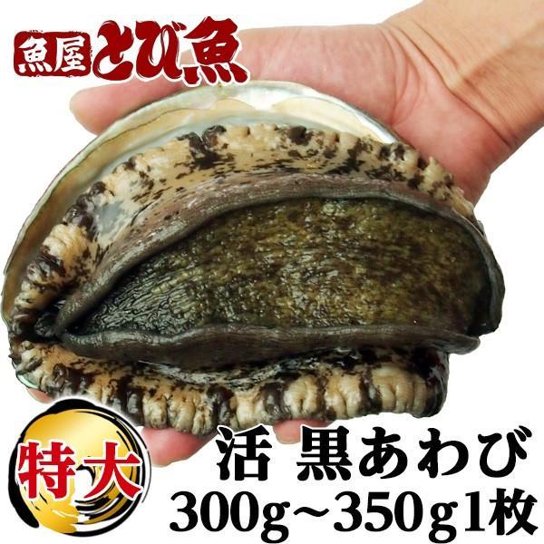 瀬戸内 海 黒 アワビ