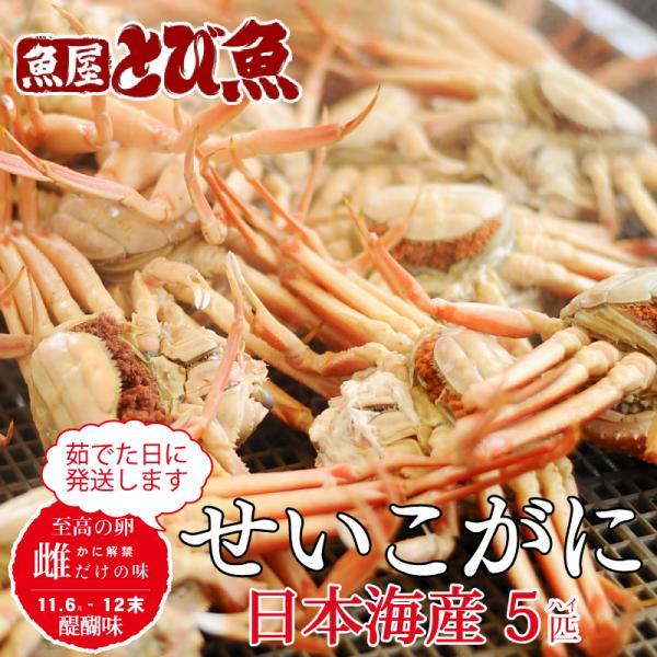 せいこがに セイコガニ 日本産海 ボイル たっぷり1kg(5-8杯) 期間限定 送料無料 ※解禁日(11/6)以降ご注文順に出荷 日付指定及び同梱不可