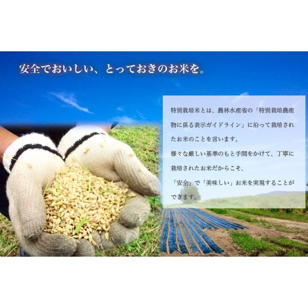 北海道米 お米 当麻 29年度米 お試し 食べ比べ 3パックセット(おぼろづき ゆめぴりか あやひめ)  メール便 送料無料   米 ポイント消化 ポッキリ|tohma-greenlife|05