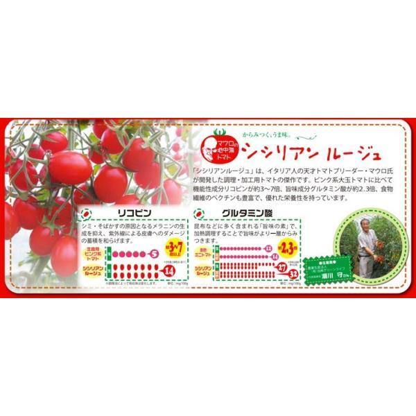 母の日 ギフトセット トマトジュース 北海道 当麻 シシリアンルージュのジュースピューレ(無塩)180ml×6本 祝い 国産 ギフト プレゼント マウロ|tohma-greenlife|03