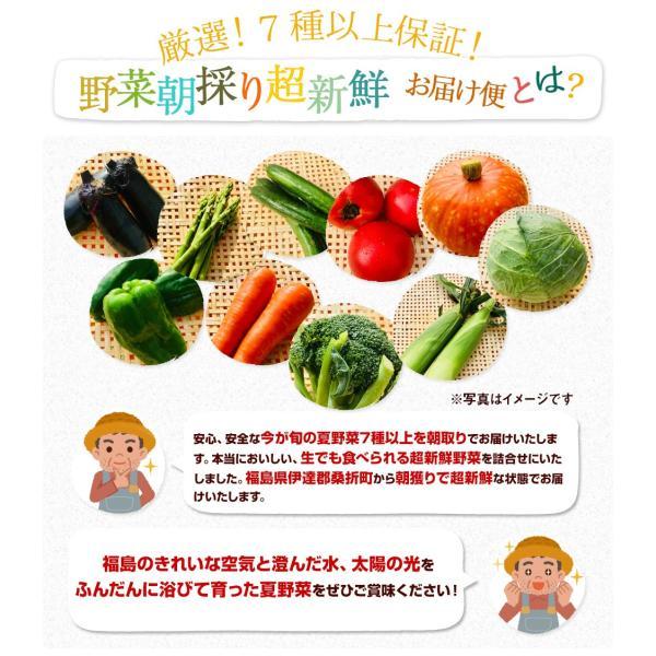 福島県産 野菜7品種詰め合わせ 無農薬 無化学肥料栽培の新鮮野菜を産地直送|tohoku-happy|02