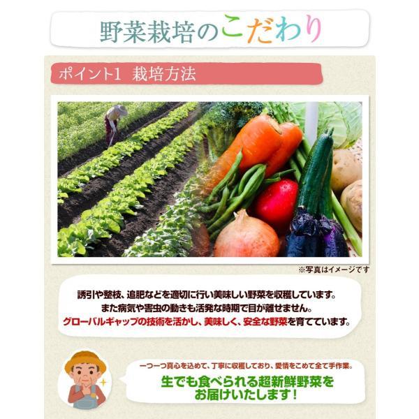 福島県産 野菜7品種詰め合わせ 無農薬 無化学肥料栽培の新鮮野菜を産地直送|tohoku-happy|03