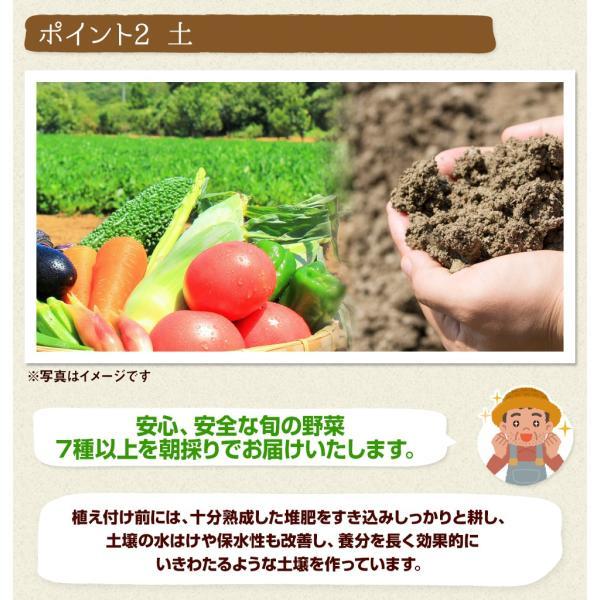 福島県産 野菜7品種詰め合わせ 無農薬 無化学肥料栽培の新鮮野菜を産地直送|tohoku-happy|04