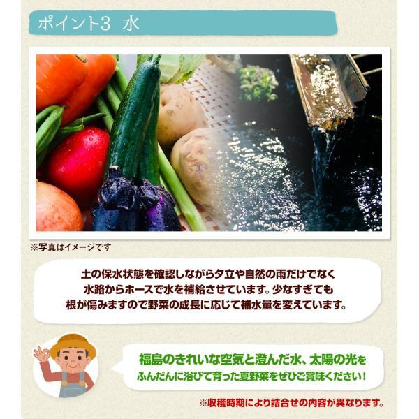 福島県産 野菜7品種詰め合わせ 無農薬 無化学肥料栽培の新鮮野菜を産地直送|tohoku-happy|05