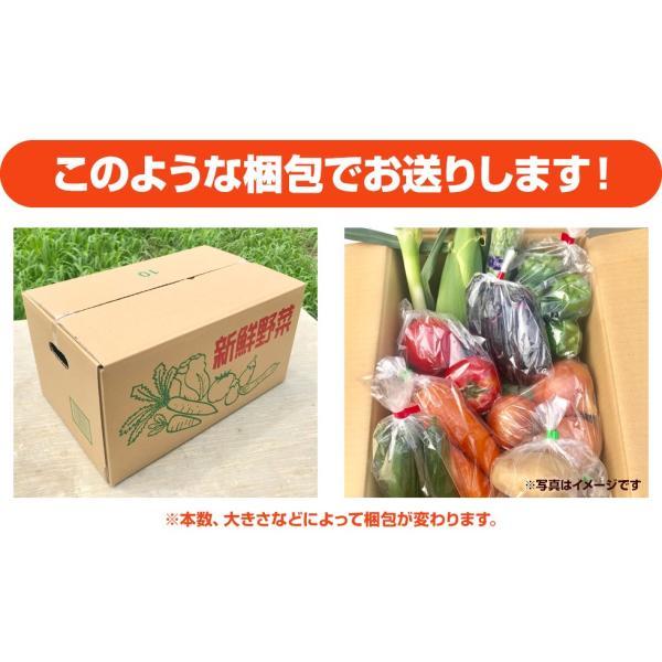 福島県産 野菜7品種詰め合わせ 無農薬 無化学肥料栽培の新鮮野菜を産地直送|tohoku-happy|09