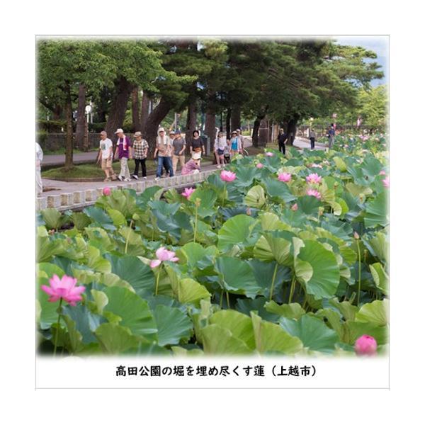 ホワイトデー 紅茶 週末の贅沢 雪月花 雪蓮紅茶 ティーパック 10P入り|tokitetsu-official|03