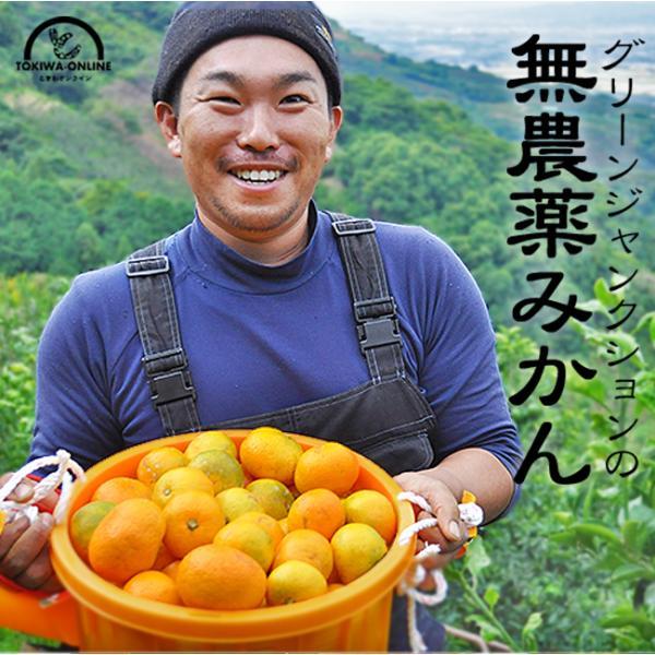 無農薬 みかん 5kg 送料無料 ミカン  和歌山 農園直送 ノーワックス 除草剤不使用 化学肥料不使用 箱買い