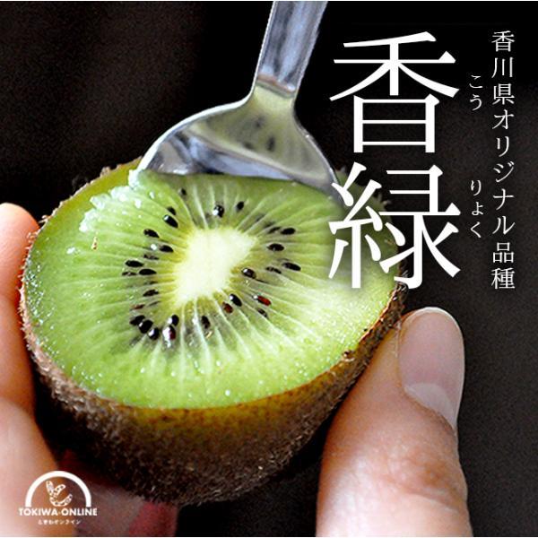 キウイ フルーツ 香緑 1.5kg 国産 香川 こうりょく 果物 キュウイ 通販 深山のキウイ