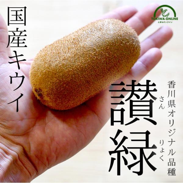 キウイ フルーツ 讃緑 1.5kg 国産 香川 さんりょく 果物 キュウイ 通販 深山のキウイ