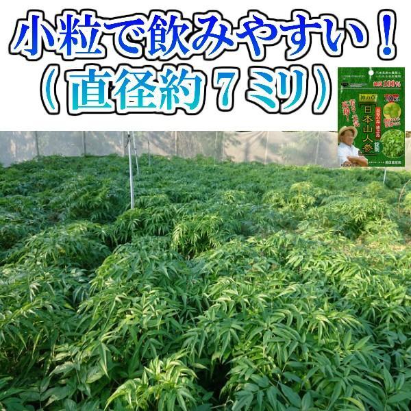 初回限定価格 日本山人参 錠剤 1袋 100錠入 ヒュウガトウキ お試し 送料無料|tokuchoumei|13
