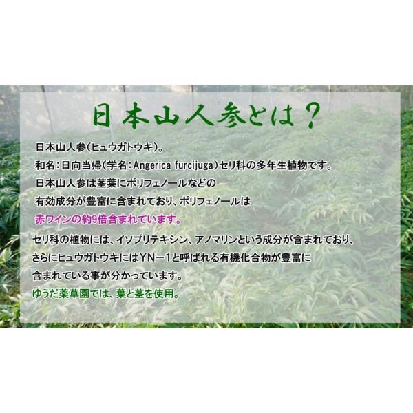 初回限定価格 日本山人参 錠剤 1袋 100錠入 ヒュウガトウキ お試し 送料無料|tokuchoumei|04