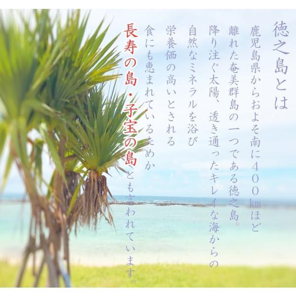 初回限定価格 日本山人参 錠剤 1袋 100錠入 ヒュウガトウキ お試し 送料無料|tokuchoumei|07