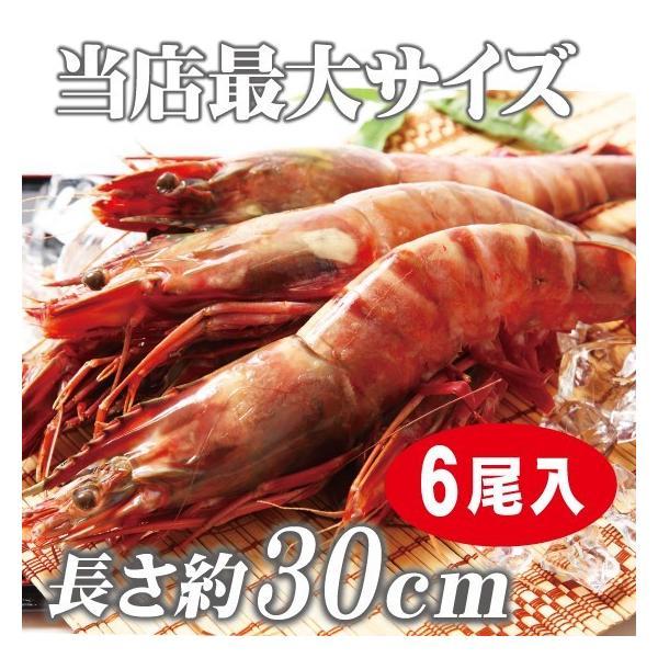 海老 「天然エビ シータイガー6尾」 超超特大 業務用 約30cm 217g ×6尾|tokudaiebi