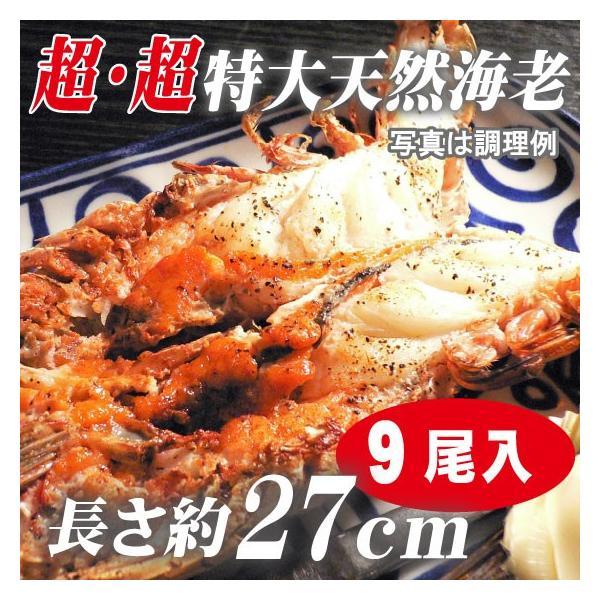 海老 「天然エビ シータイガー9尾」 超超特大 業務用 約27cm 144g ×9尾   ※天然海老ですので長さ・大きさにはバラツキがあります。