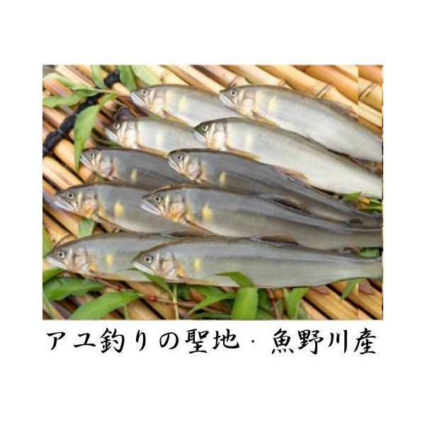 新潟県魚野川産 天然鮎 活〆-60.0℃急速冷凍 10匹 LLサイズ(111.0g〜125.0g)|tokusanuonuma
