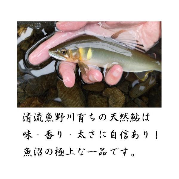 新潟県魚野川産 天然鮎 活〆-60.0℃急速冷凍 10匹 LLサイズ(111.0g〜125.0g)|tokusanuonuma|02