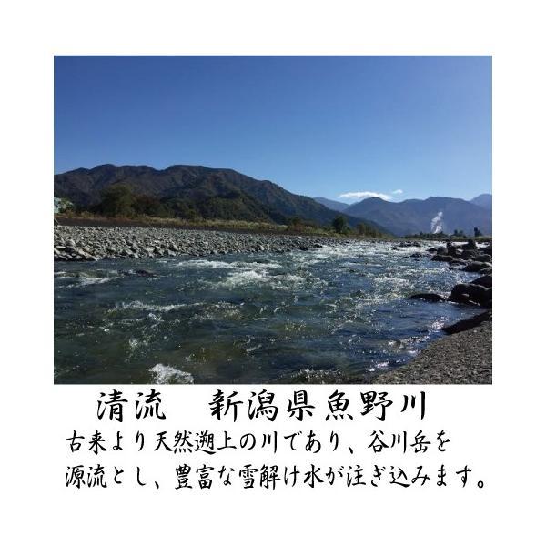 新潟県魚野川産 天然鮎 活〆-60.0℃急速冷凍 10匹 LLサイズ(111.0g〜125.0g)|tokusanuonuma|03