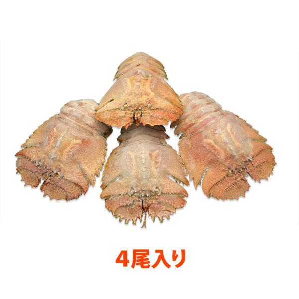 活〆うちわ海老(100〜150g/匹) 4匹