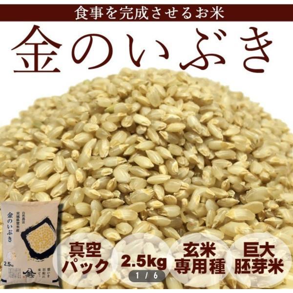 金のいぶき 2.5kg 米 29年 玄米 宮城 登米  特別栽培米 農薬・化学肥料不使用 食事を完成させるお米|tomerice