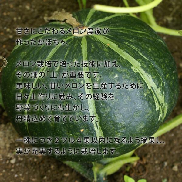 富良野産 かぼちゃ4種セット【5kg】|tomita-melon|03
