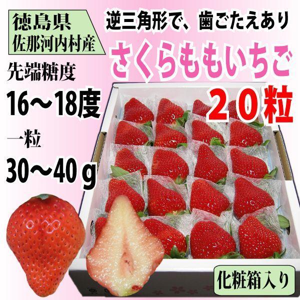 いちご さくらももいちご イチゴ 苺 20粒 化粧箱入り 送料無料 1〜4月にお届け