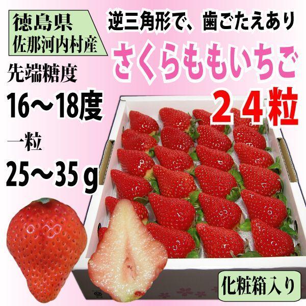 いちご さくらももいちご イチゴ 苺 24粒 化粧箱入り 送料無料 1〜4月にお届け