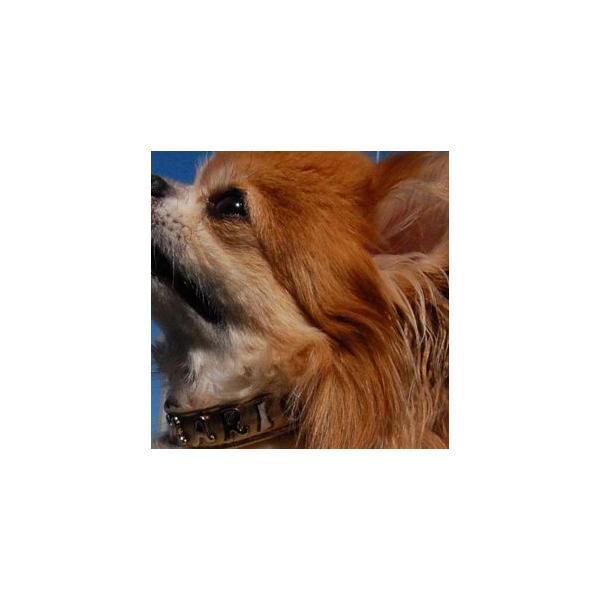 イニシャル犬首輪(名前) Mサイズ スタッズ トップワン 小型犬 中型犬 オーダーメイド ハンドメイド  アルファベット  ペット用品 通販|topwan|02