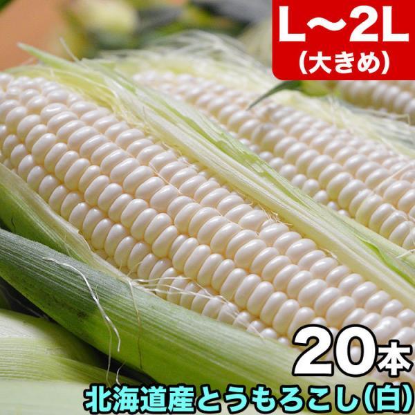 とうもろこし Lサイズ 白 ホワイト 20本 北海道産 8月下旬前後頃から注文順に出荷 お届け日指定不可選択指定無効