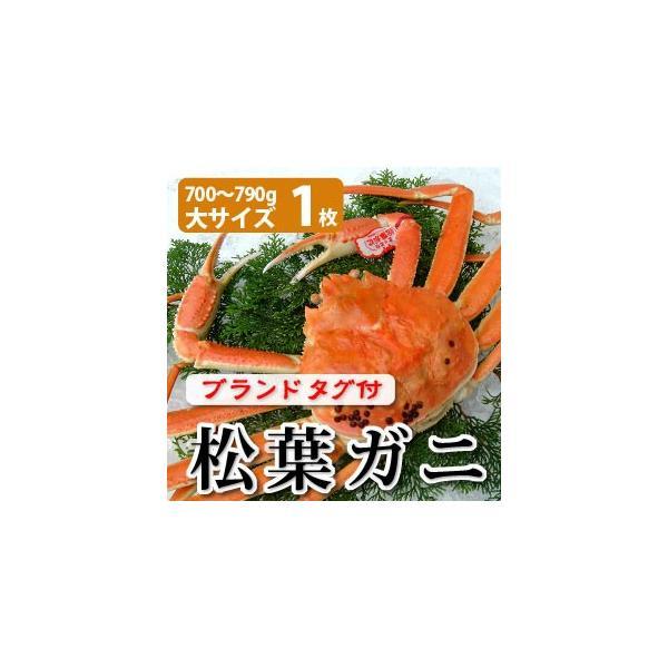 松葉ガニ(松葉がに)700〜790g(大サイズ)×1枚 日本海産 未冷凍 お歳暮ギフト 送料無料(北海道・沖縄を除く)