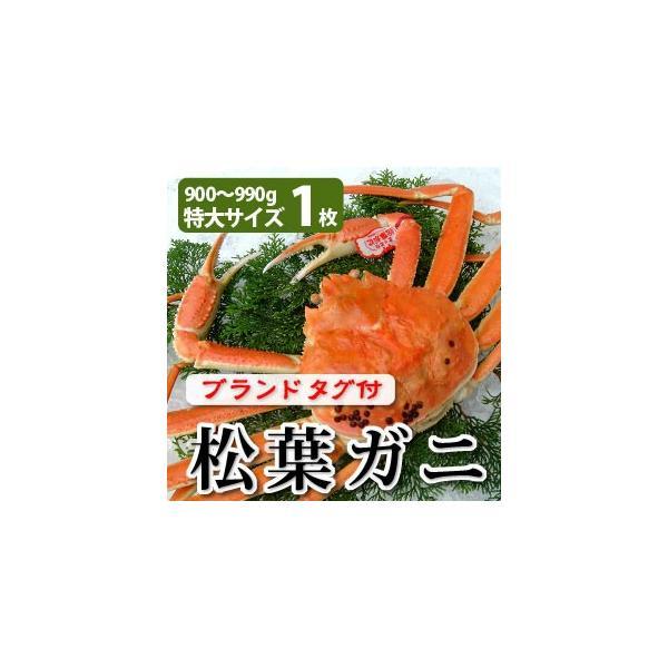 松葉がに(松葉ガニ)900g以上(特大サイズ)×1枚 日本海産 未冷凍 お歳暮ギフト 送料無料(北海道・沖縄を除く)
