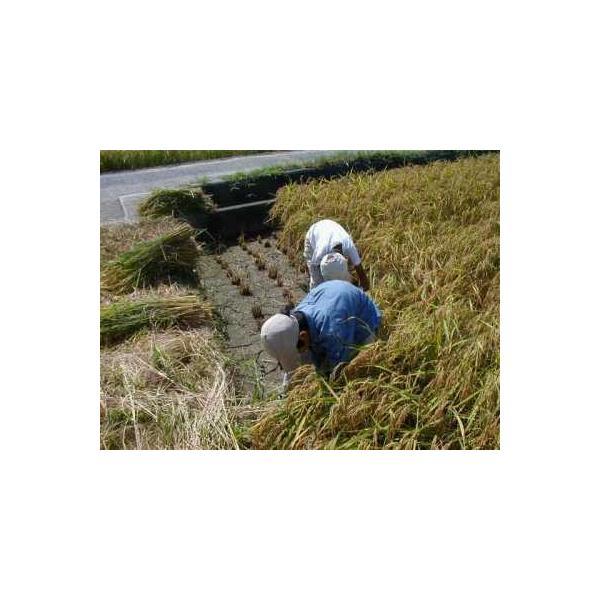 無農薬米 有機栽培米 コシヒカリ 玄米5kg×3袋 令和3年産