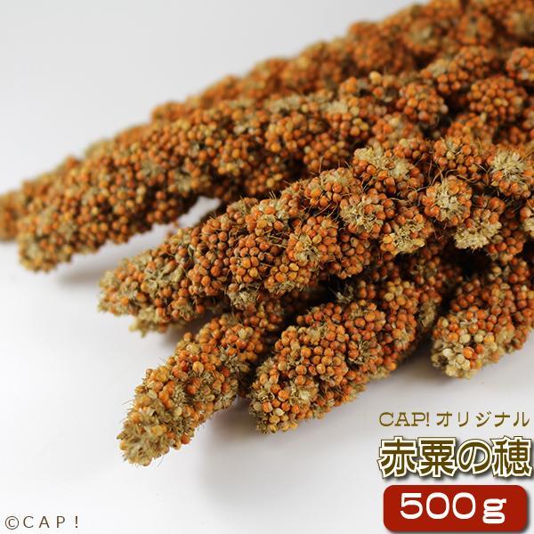赤粟の穂 500g|torimura