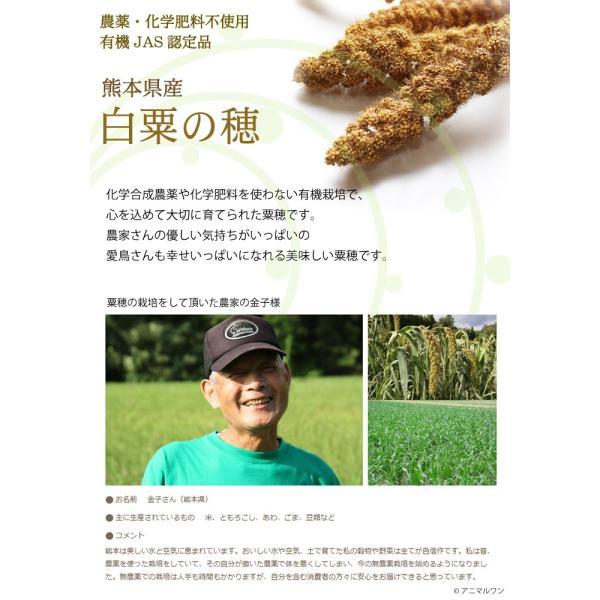 CAP! 鳥の餌 在庫処分市 有機JAS認定品 白粟の穂 100g 2018年産 熊本県産 ※緑ラベル※ torimura 03