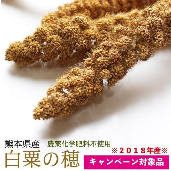 ※セット価格※ 熊本県産 有機JAS認定品 白粟の穂 100g 2018年産 ※緑ラベル※ CAP! 鳥の餌単品でのご注文は¥1,540となります。|torimura