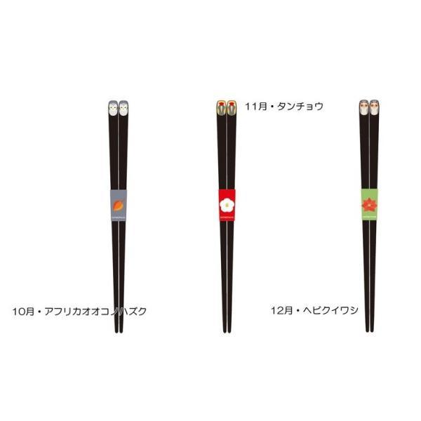 (KOTORITACHI)インコ箸 12種類(メール便)|torippie|05