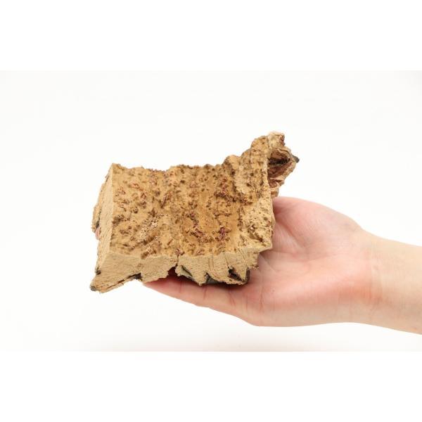 インコのおもちゃ 天然そのまま コルクの木 torippie 03