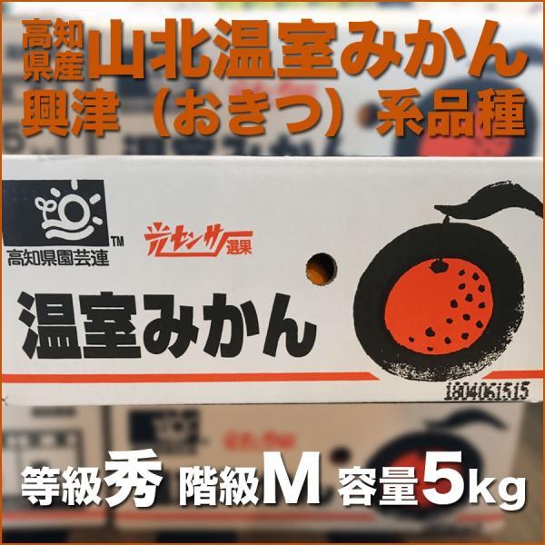 たっぷり5kgでお買い得 高知県産 山北ハウスみかん 興津系品種 Mサイズ|tosa-umaimon