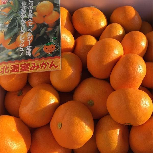 たっぷり5kgでお買い得 高知県産 山北ハウスみかん 興津系品種 Mサイズ|tosa-umaimon|02