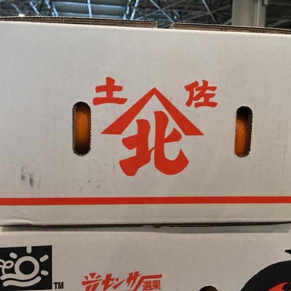 たっぷり5kgでお買い得 高知県産 山北ハウスみかん 興津系品種 Mサイズ|tosa-umaimon|03