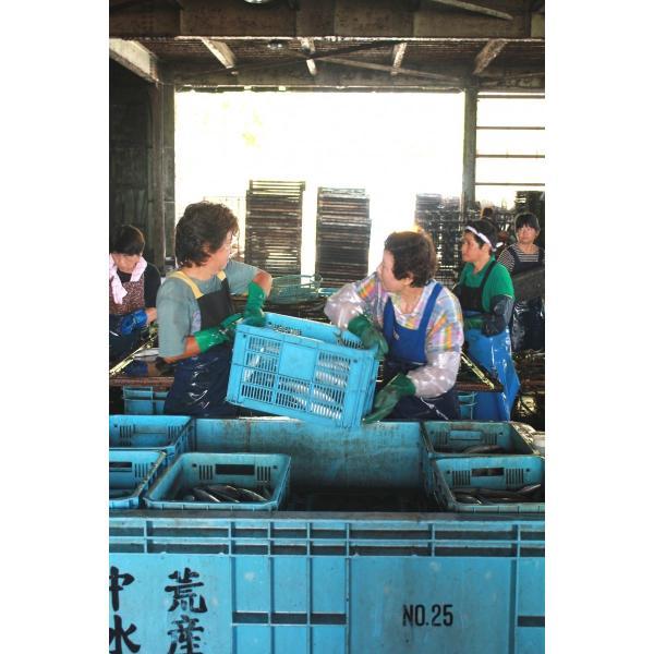 受注生産 完全無添加 一番手(最上級品) 宗田節[:SOU]  節単品 (お届けまでに1〜3週間ほどいただきます)|tosashimizu-kurashi|02