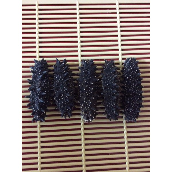 乾燥(黒) なまこ 北海道産 1KG入 8-10g Mサイズ A級品 ナマコ 海参 黒なまこ 黒ナマコ 黒海参 乾燥ナマコ 干しなまこ 干しナマコ