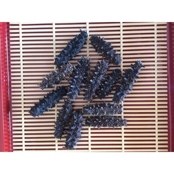 北海道産 乾燥なまこ 500G125個前後入 A級品 なまこ ナマコ 海参 乾燥ナマコ 干しなまこ 干しナマコ 刺参