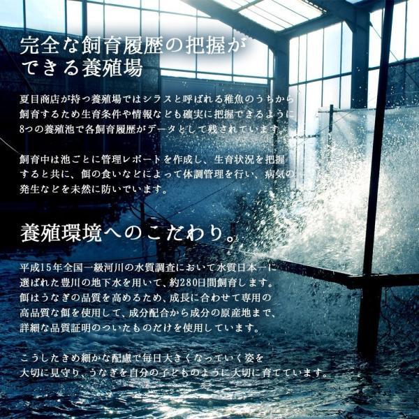 うなぎ 肝蒲焼き串打ち 約35g×5本入|toyohashiunagi|11