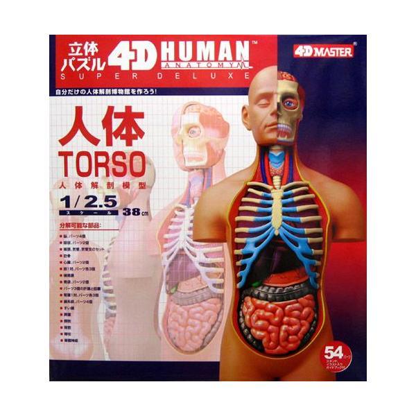 立体パズル 4D VISION 人体解剖 No.SP スーパーデラックス胴体解剖モデル
