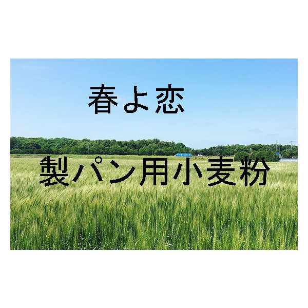 春よ恋 25kg 北海道産小麦として高い評価を受けている「春よ恋」を100%使用した強力小麦粉です。増田製粉所製造100%